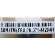 Серверная память SUN (FRU PN 371-4429-01) 4096Mb (4Gb) DDR3 ECC, память для сервера SUN FRU P/N 371-4429-01